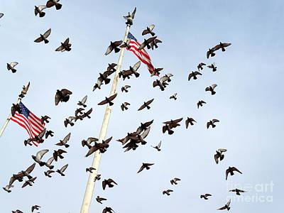 Photograph - Patriotic Pigeons by Ed Weidman