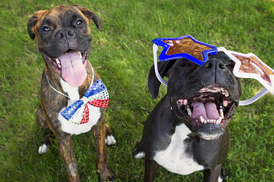 Brindle Photograph - Patriotic Pups by Stephanie McDowell