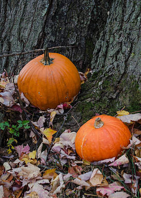 Photograph - Pat's Pumpkins by Stephanie Maatta Smith