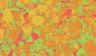 Photograph - Leafy Pattern In Warm Colours by Nareeta Martin