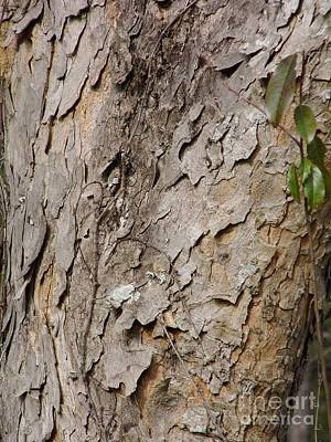 Photograph - Pattern In The Tree Bark by D Hackett