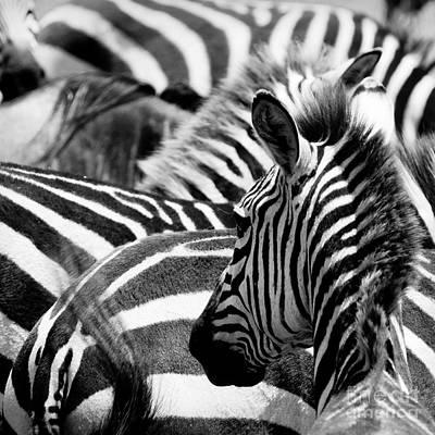 Exoticism Photograph - Pattern Of Zebras by Konstantin Kalishko
