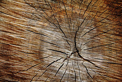 Photograph - Patterned Wood by Debbie Oppermann