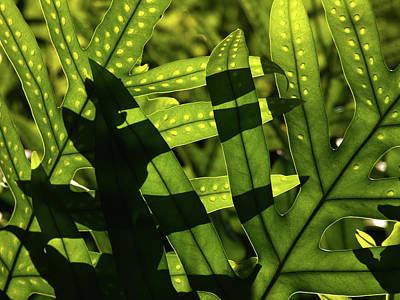 Photograph - Patterns In Nature by Roger Mullenhour
