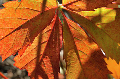 Photograph - Patterns In Orange by Ron Cline