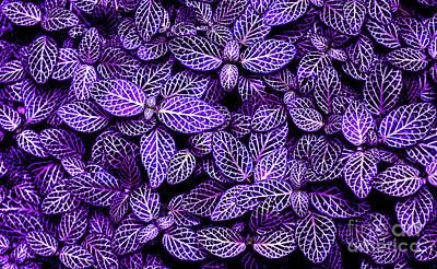 Photograph - Patterns Of Nature 3  by Zaira Dzhaubaeva