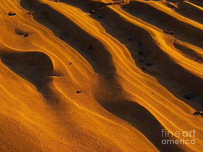 Photograph - Patterns by Trena Mara