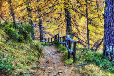 Photograph - Patway Among Fall Colors by Roberto Pagani