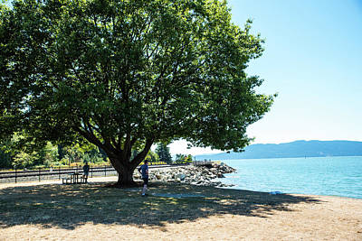 Photograph - Pause By The Bay by Tom Cochran