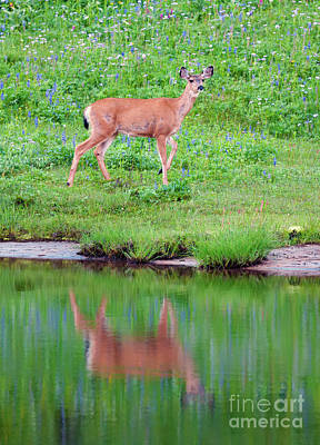 Photograph - Pausing For Reflection by Mike Dawson