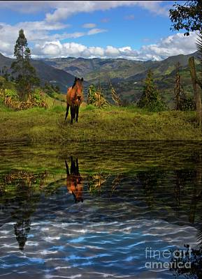 Photograph - Paute Horse Reflection by Al Bourassa