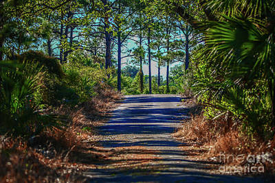Photograph - Paved Hiking Trail by Tom Claud