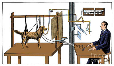 Pavlovian Experiment On Dog Art Print by Science Source