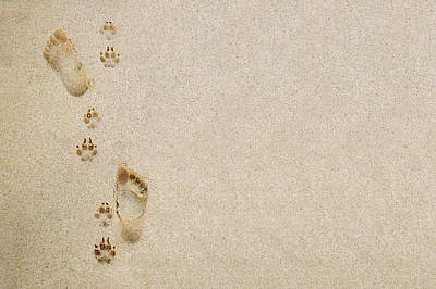 Paw And Footprint 1 Art Print