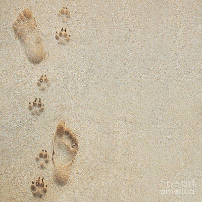 Paw And Footprints 2 Art Print
