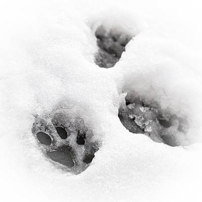 Winter Storm Photograph - Paw Print  by Tom Gowanlock