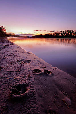 Photograph - Paw Prints Along The River by Scott Bean