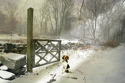 Dog In Snow Digital Art - Paw Prints by Diana Angstadt
