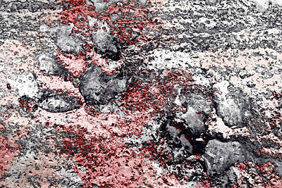 Photograph - Paw Prints In Grey And Red by Dorothy Berry-Lound
