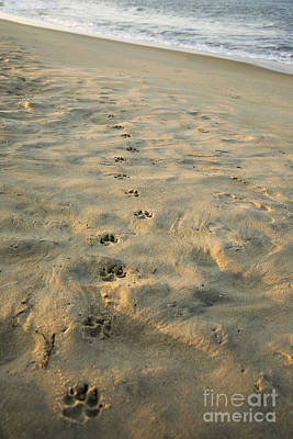 Paw Prints In The Sand Art Print by Roberto Westbrook