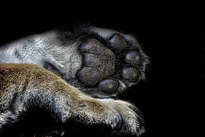 Dog Abstract Art Photograph - Paw Prints by Martin Newman