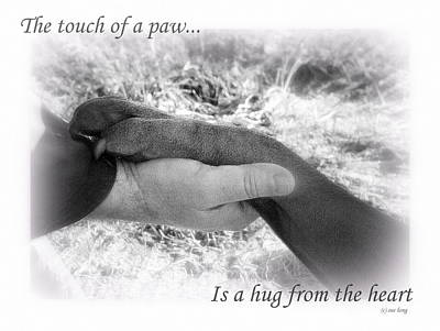 Photograph - Paw Touch by Sue Long