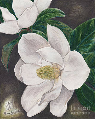 Magnolia Flower Drawing - Pawpaw's Magnolias by Brandy Woods