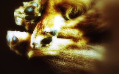 Paws For Thought Art Print by Isabella F Abbie Shores FRSA