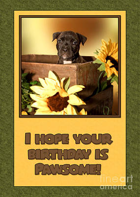 Digital Art - Pawsome Birthday Pup by JH Designs