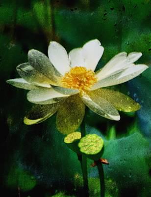 Photograph - Paynes Prairie Lotus Bloom by Sheri McLeroy