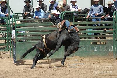 Photograph - Pbr Bareback Bronc Riding by Cheryl Poland