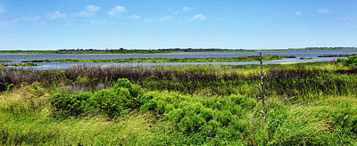 Photograph - Pea Island National Wildlife Refuge - Outer Banks by Brendan Reals