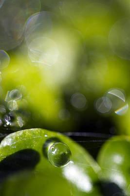 Photograph - Pea by Rebecca Cozart