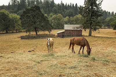 Photograph - Peace As Pastime by Belinda Greb