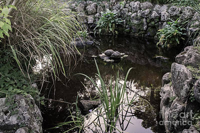 Photograph - Peace At The Pond by Naomi Burgess
