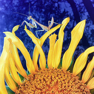 Mantis Photograph - Peace Brings Death by TC Morgan