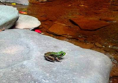 Photograph - Peace Frog by Danielle R T Haney