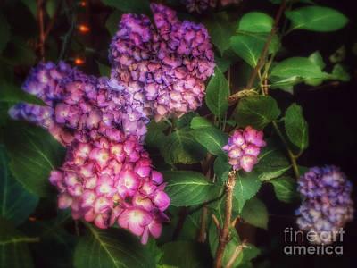 Photograph - Peace Garden - Purple Hydrangeas by Miriam Danar