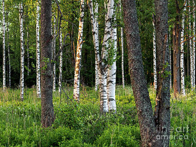 Photograph - Peace In The Forest by Ismo Raisanen