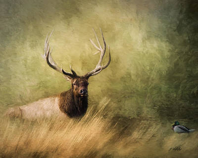 Painting - Peace Is A Journey - Wildlife Art by Jordan Blackstone