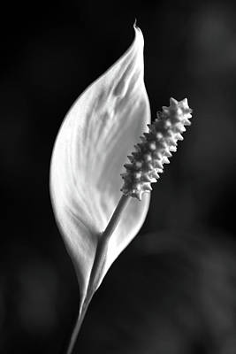 Photograph - Peace Lily 030818 Bw by Mary Bedy