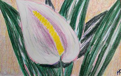 Houseplants Drawing - Peace Lily by Helen Krummenacker
