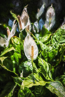Photograph - Peace Lily Or Spath Lily Painted   by Rich Franco
