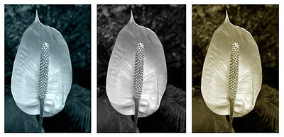 Photograph - Peace Lily Triptych by Terence Davis