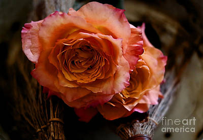 Photograph - Peace Roses by Diana Mary Sharpton