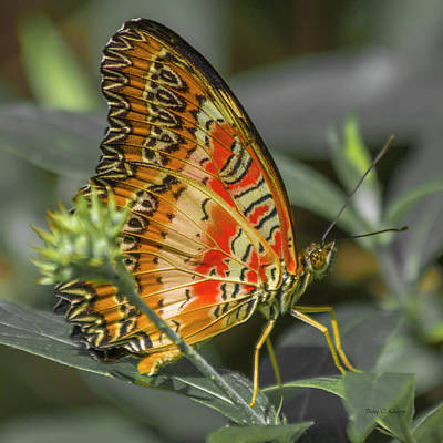 Butterfly Garden Photograph - Peaceflyer by Betsy Knapp
