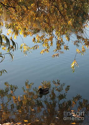 Photograph - Peaceful Autumn Day by Carol Groenen