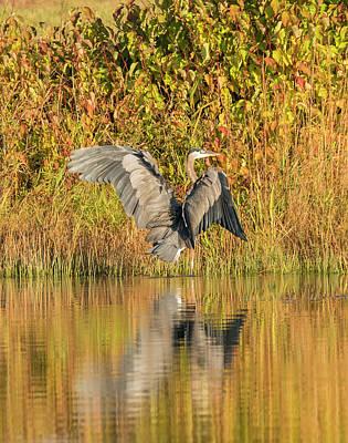 Photograph - Peaceful Autumn Morning by Loree Johnson