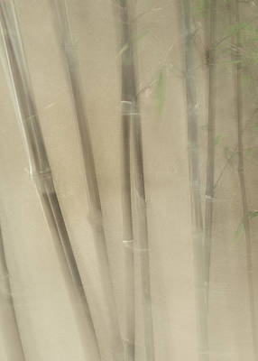 Photograph - Peaceful Bamboo by Lynn Wohlers