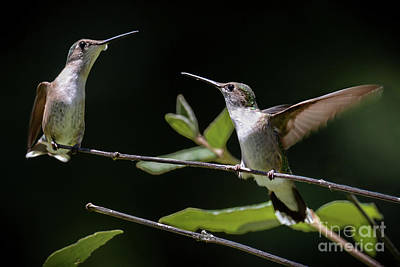 Photograph - Peaceful Confrontation by Amy Porter